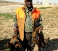 pheasant 444